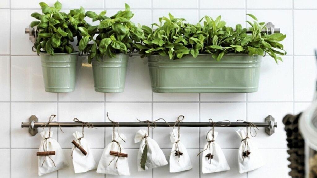 plantas para cocina